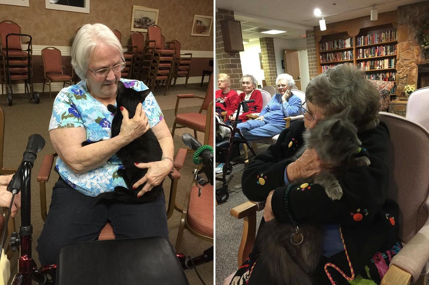 Idős menhelyi cicák ragyogják be a nyugdíjas otthon lakóinak napjait