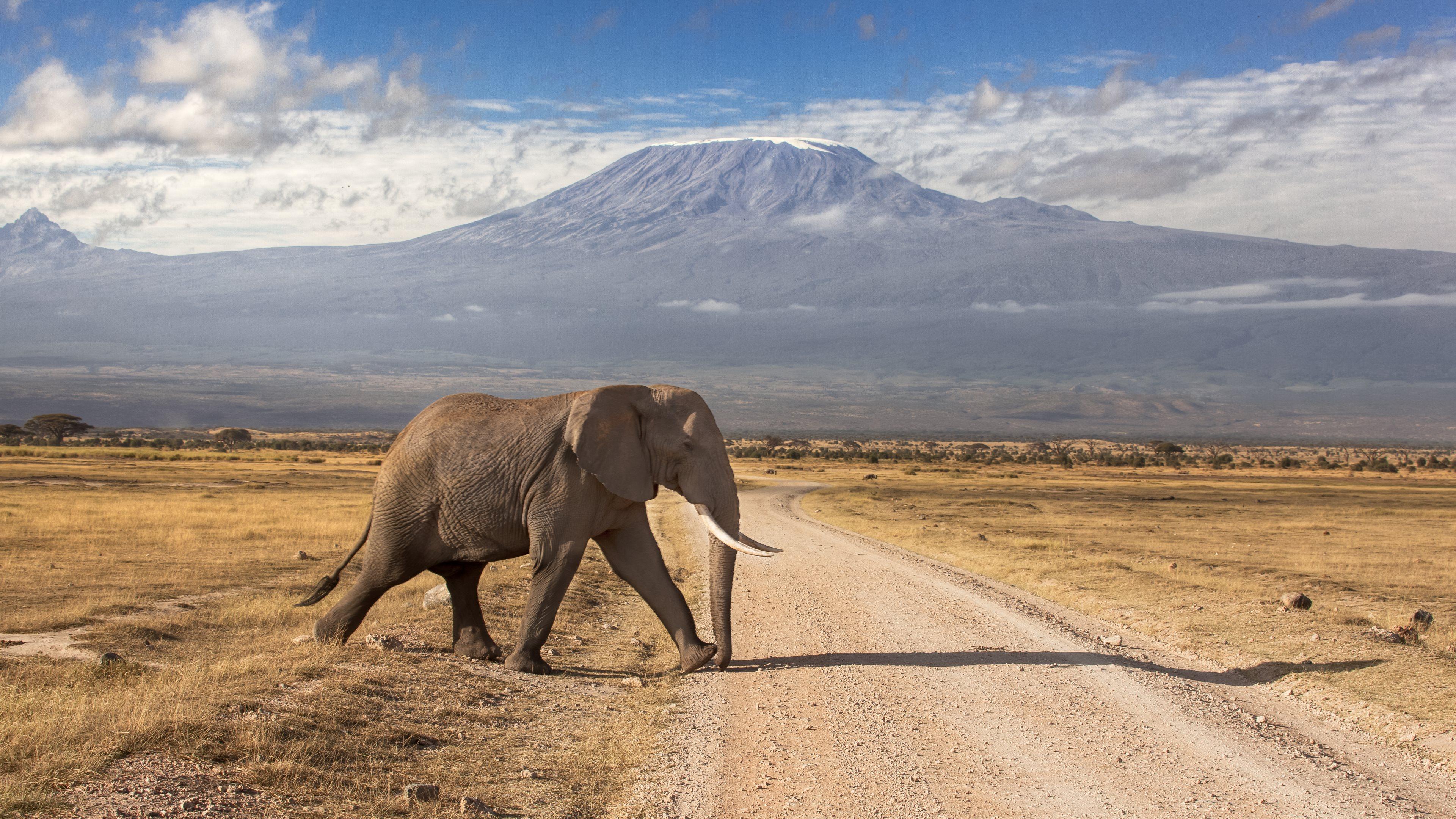 Csökken az illegális elefántvadászat mértéke Afrikában