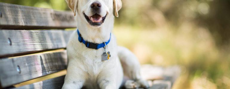 A kutyákban jobban bíznak az emberek, mint a riasztókban egy felmérés szerint