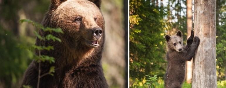 Három napra beköltözött ez a fotós 40 medvéhez – Íme a végeredmény