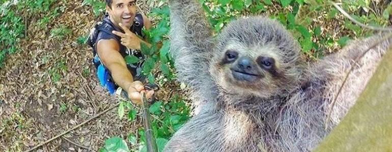 Ennél jobb selfie még sohasem készült, ugyanis egy lajhár a főszereplője