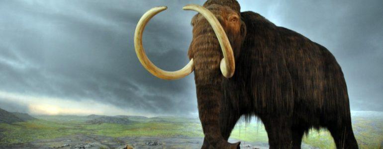 Szomjan halhatott a gyapjas mamutok egyik utolsó csoportja