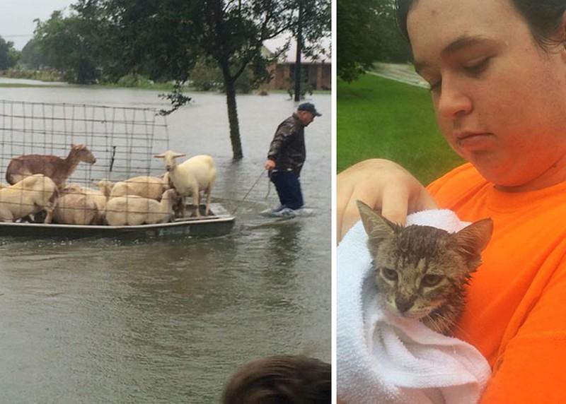 Állataik nélkül nem hajlandóak távozni az áradás elől menekülő emberek