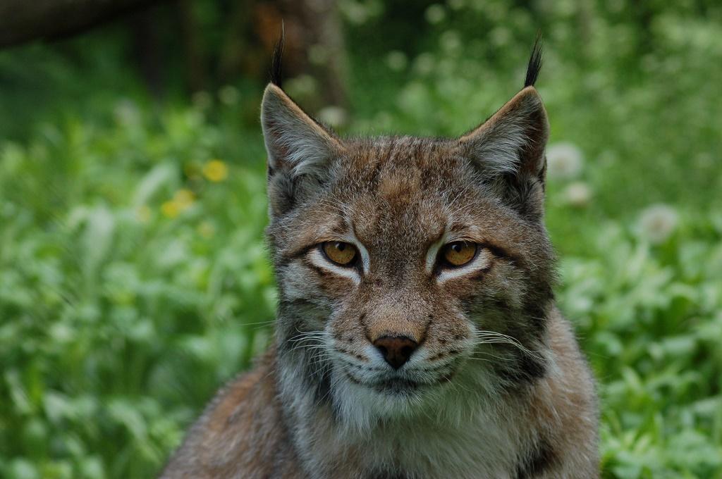 Közelebb a természethez, közelebb az állatokhoz – 33 éves a Miskolci Állatkert és Kultúrpark