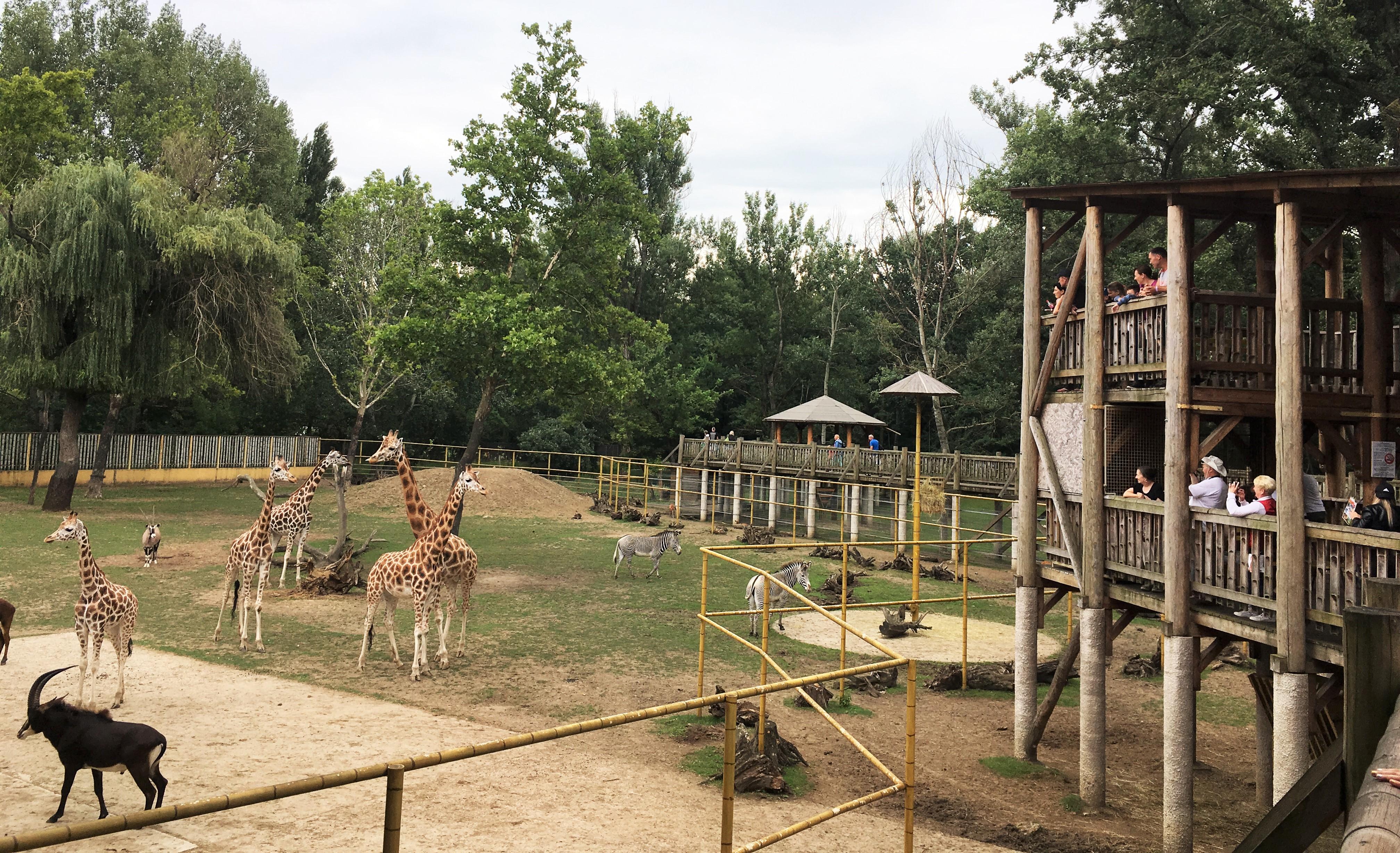 Már a látogatók is megtekinthetik  a Nyíregyházi Állatpark Afrika kifutójának legifjabb lakóit