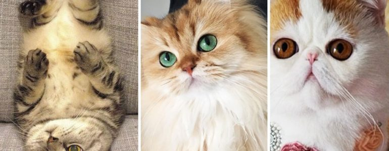 Így szólítják a cicákat a világ különböző országaiban