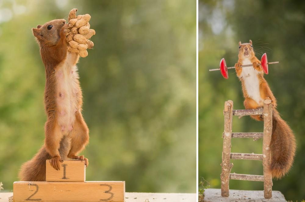 Így nézne ki az olimpia, ha mókusok mérnék össze erejüket