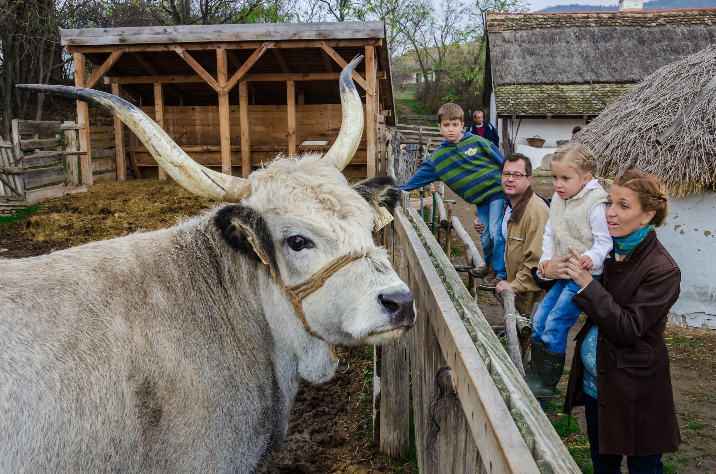 Az állatoké a főszerep a Skanzenben az ünnepi hétvégén