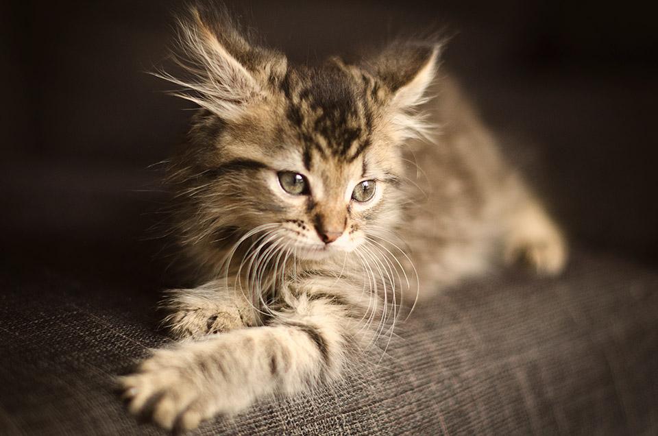 Mikrochipet kapnak a macskák Új-Zélandban