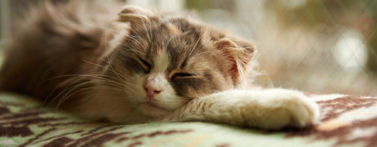 Várandós a cicád? 5 tipp, amivel kényelmesebbé teheted a mindennapjait