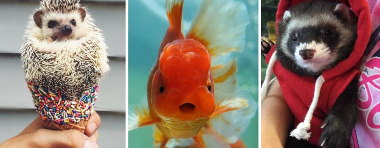 21 imádnivaló állatos fotó, csak úgy