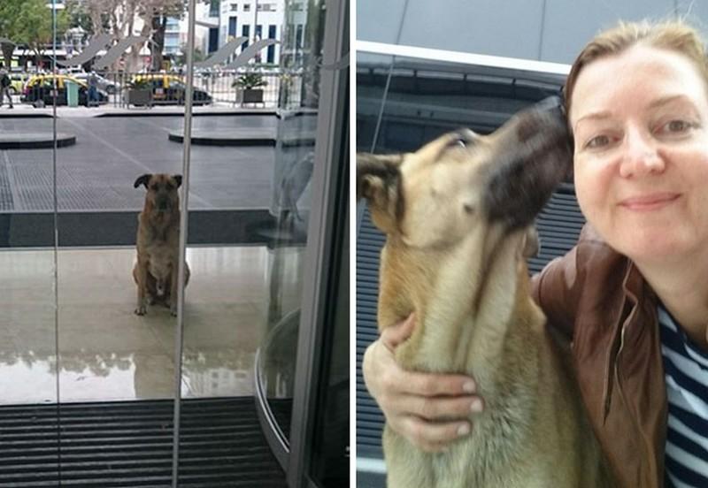 Minden utazásánál a reptéren várta a nőt ez a kutyus – Most mindketten megtalálták a boldogságot