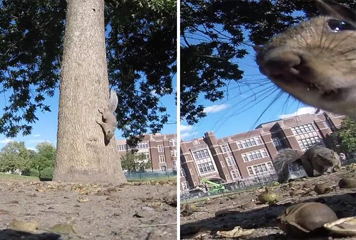 Ez történik, ha egy mókus meglovasít egy GoPrót
