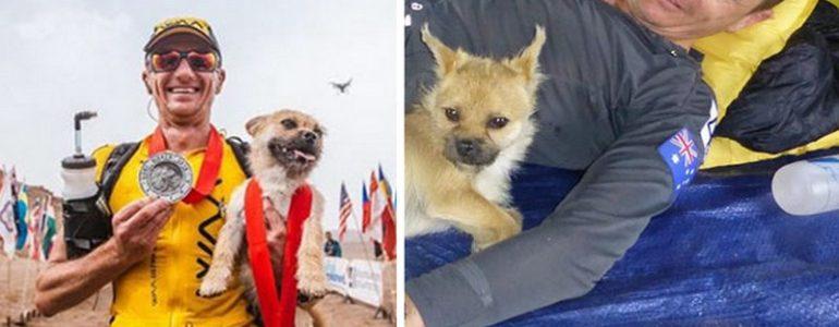 Egy futóversenyen kezdte követni a férfit ez a kóbor kutyus, azóta elválaszthatatlanok