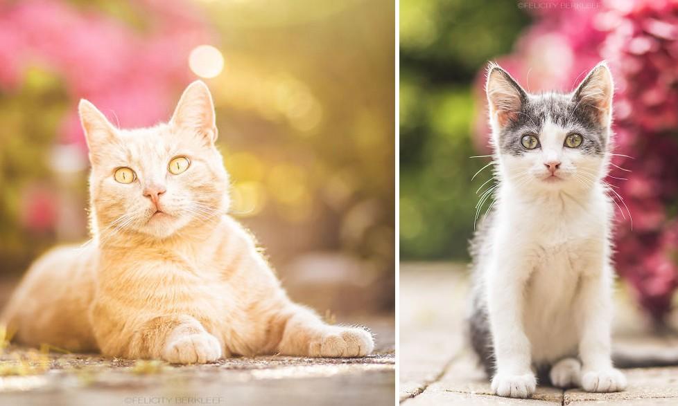 A nyár utolsó sugaraival játszó cicákról készült bájos fotósorozat