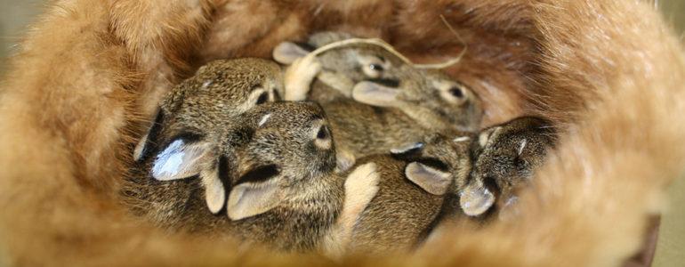 Életeket menthetnek az állatvédők által gyűlölt szőrmebundák