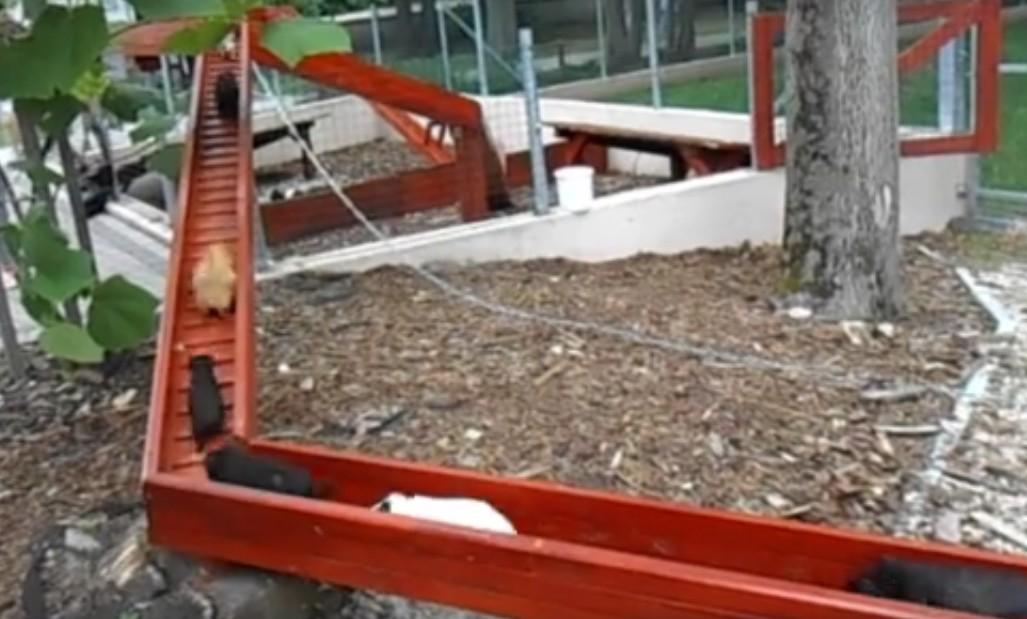 Tengerimalac-vonat száguld minden nap a győri állatkertben
