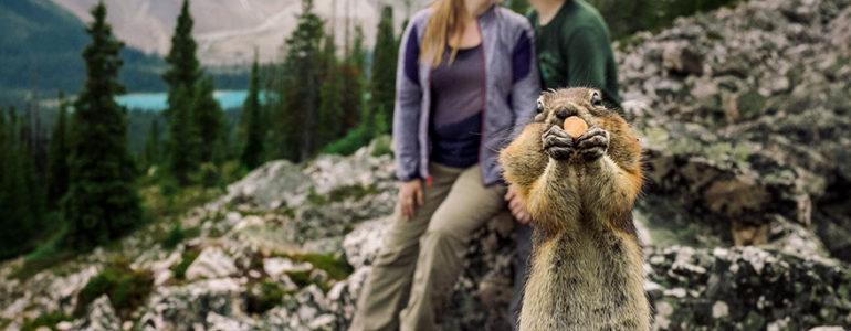 Imádnivalóan trollkodta szét a jegyesfotózást egy mókus