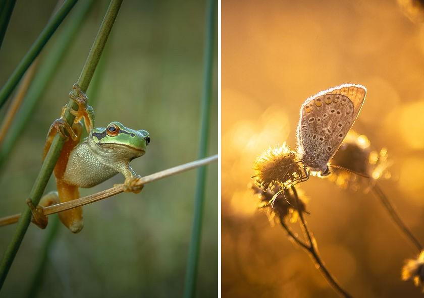 A természet nyers szépségét örökíti meg ez a tehetséges fotós