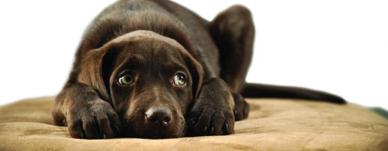 Így őrizd meg  kutyusod nyugalmát még nyaralás közben is