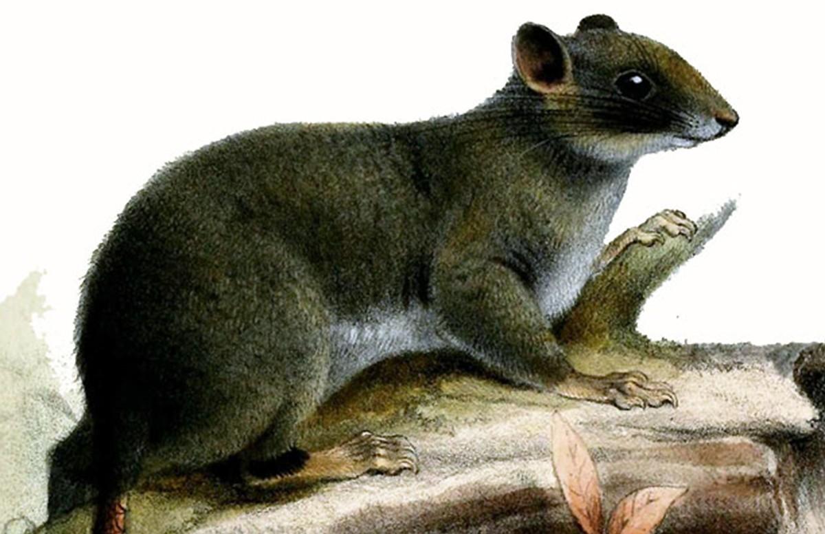 Élve sosem tanulmányozott afrikai mókusfaj génjeit sikerült megvizsgálni