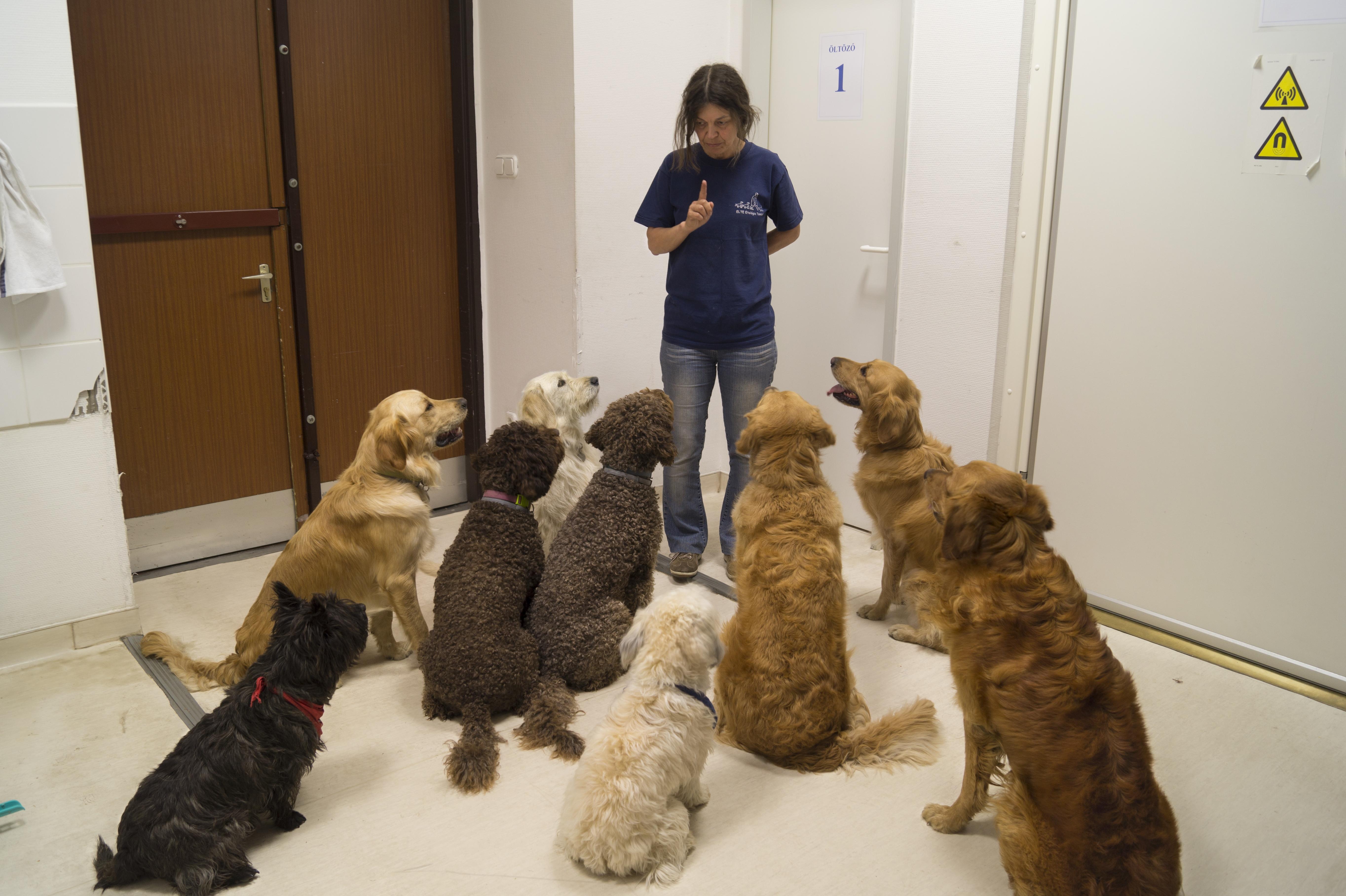 Magyar kutatás: a kutyák agya az emberéhez hasonlóan dolgozza fel a beszédet