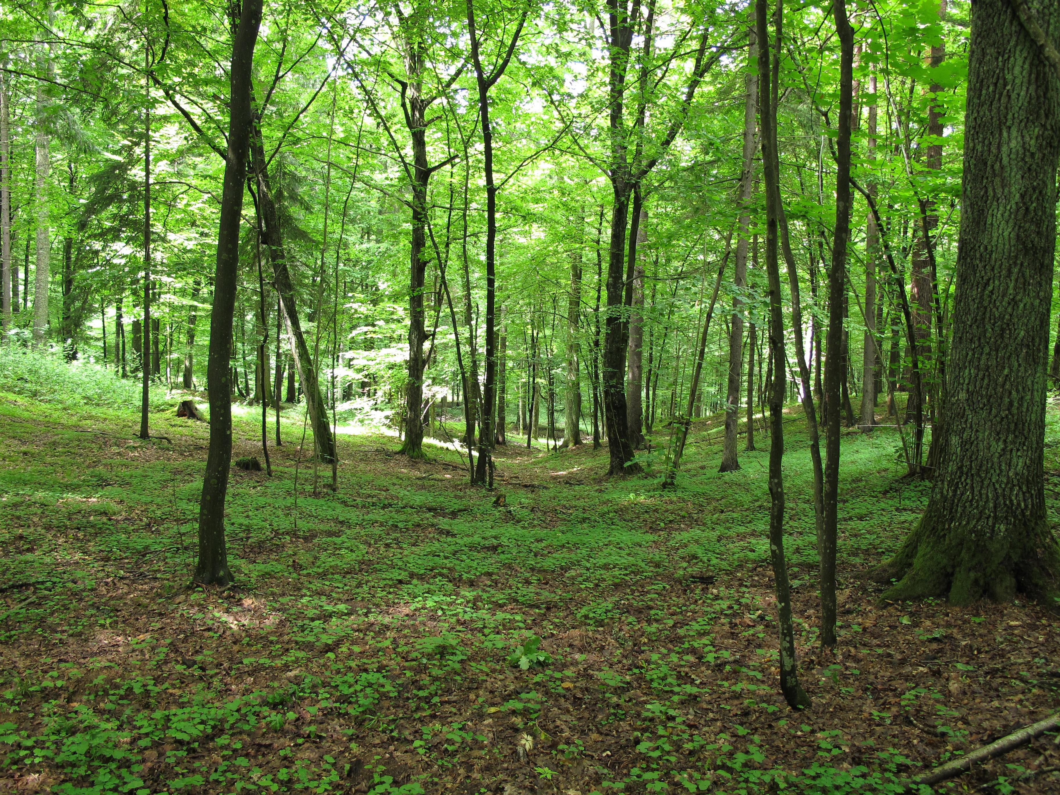 """Budapestre """"költöznek"""" a magyarországi erdők pénteken és szombaton"""