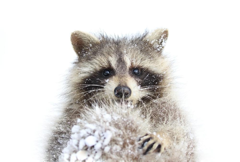 Állatok téli trükkjei a Budakeszi Vadasparkban