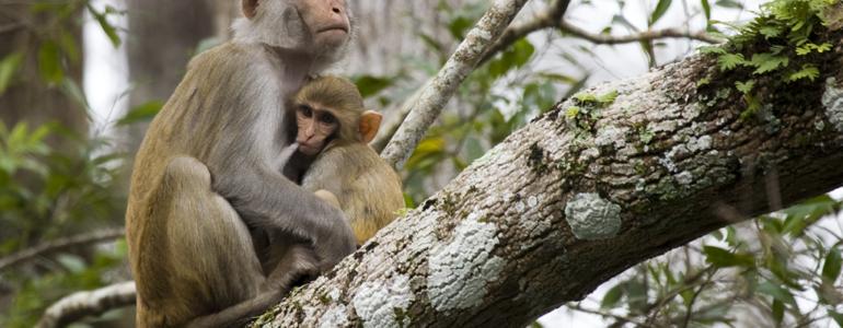 Percenként tizenkét szó legépelésére voltak képesek majmok pusztán a gondolataikkal