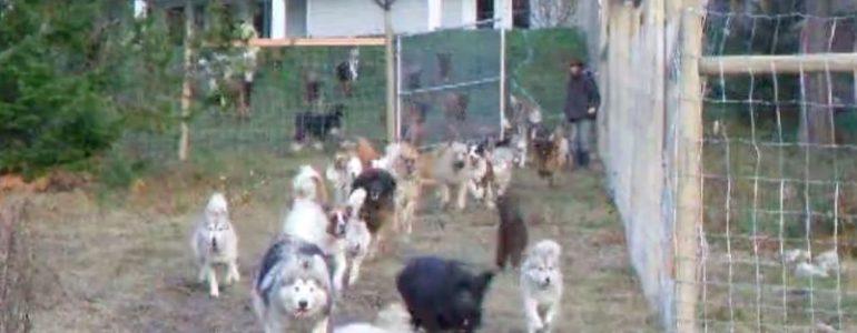 Menhelyi kutyusok, mégis kicsattannak a boldogságtól, hála a jószívű befogadójuknak