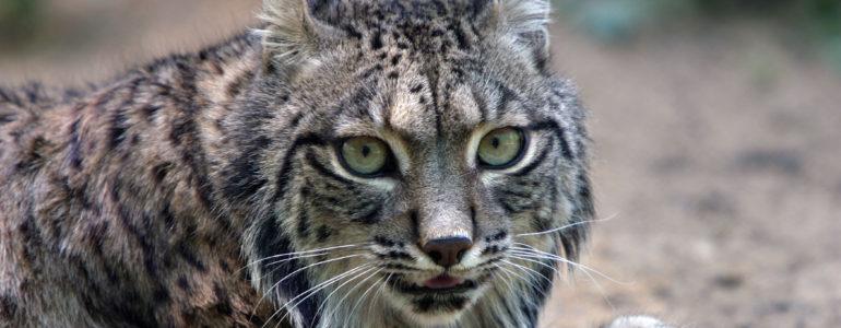 WWF: veszélyben Európa legnagyobb temészetvédelmi területe