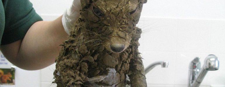 Még az állatmentők sem tudták pontosan mit találtak a sárban, amíg meg nem fürdették