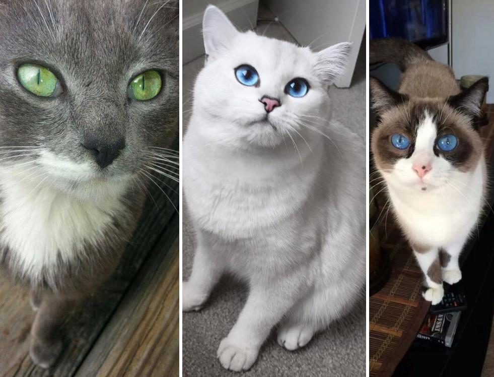 Elveszted az időérzéked, ha belenézel ezeknek a cicáknak a szemébe