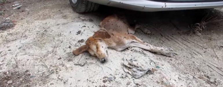 Halottnak hitték a kutyát, de ő bebizonyította, hogy csodák léteznek