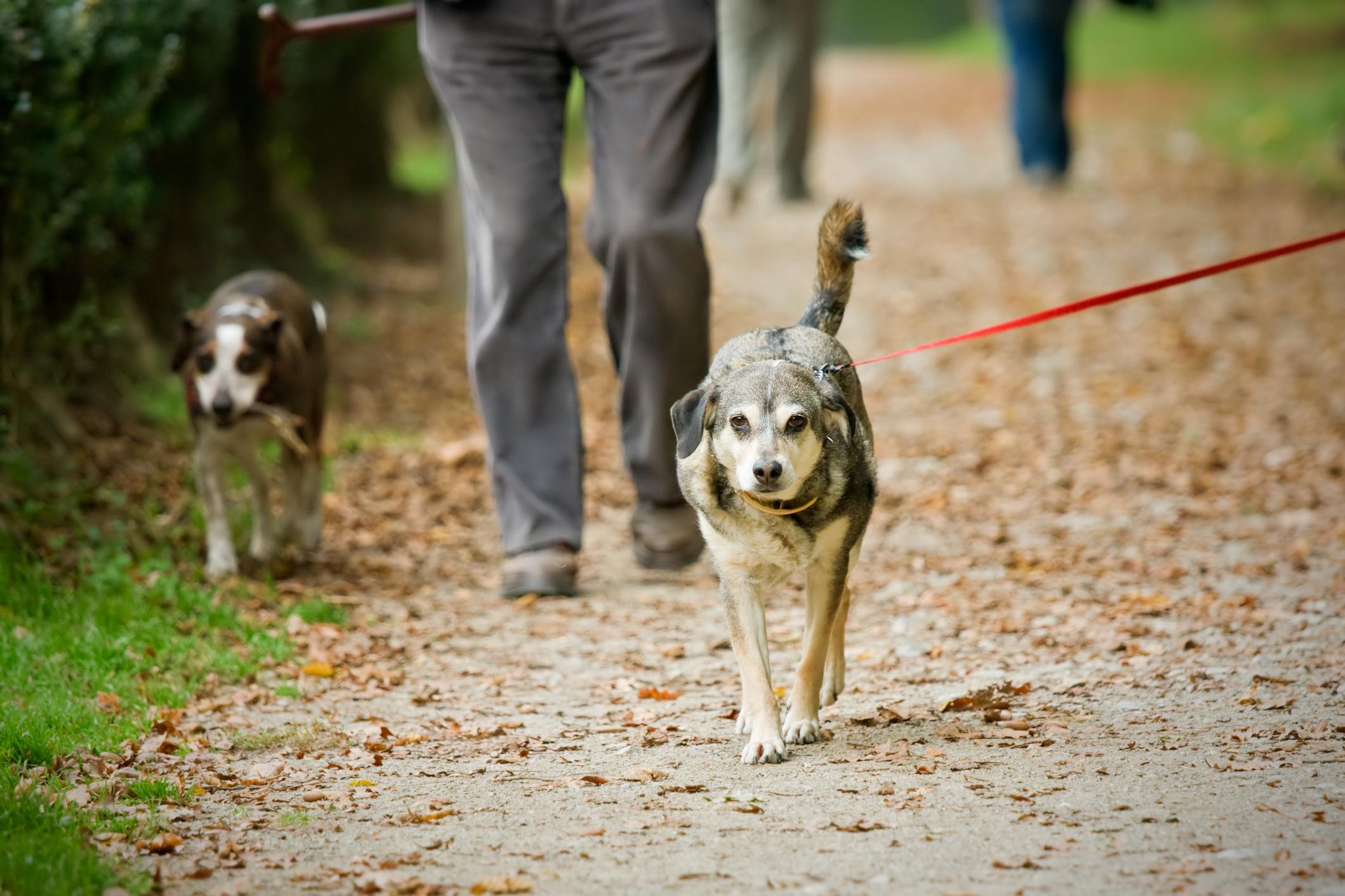 Pécsi gazdik figyelem! Mérgezett kolbásszal próbálják irtani a kertvárosi kutyákat