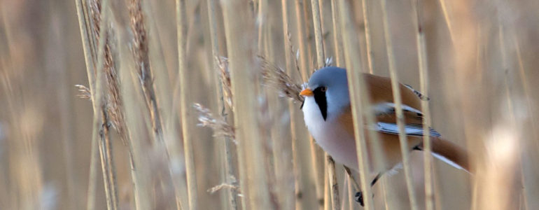 A madarak vonulásáról gyűjtenek információt idén is Európai Madármegfigyelő Napokon
