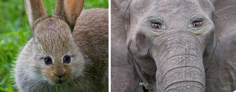 Vicces fotók arról, hogy néznének ki az állatok, ha elöl ülő szemeik lennének
