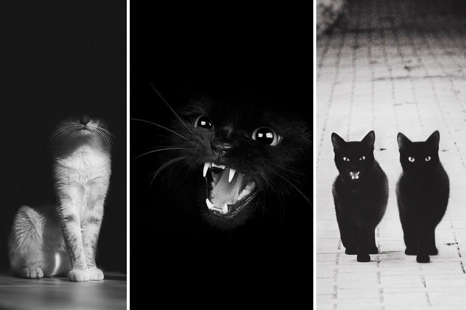 24 fotó a macskák különleges életéről, feketén-fehéren