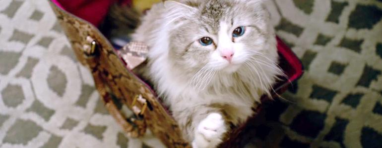 Kilenc élet – Macskás vígjáték sztárszínészekkel
