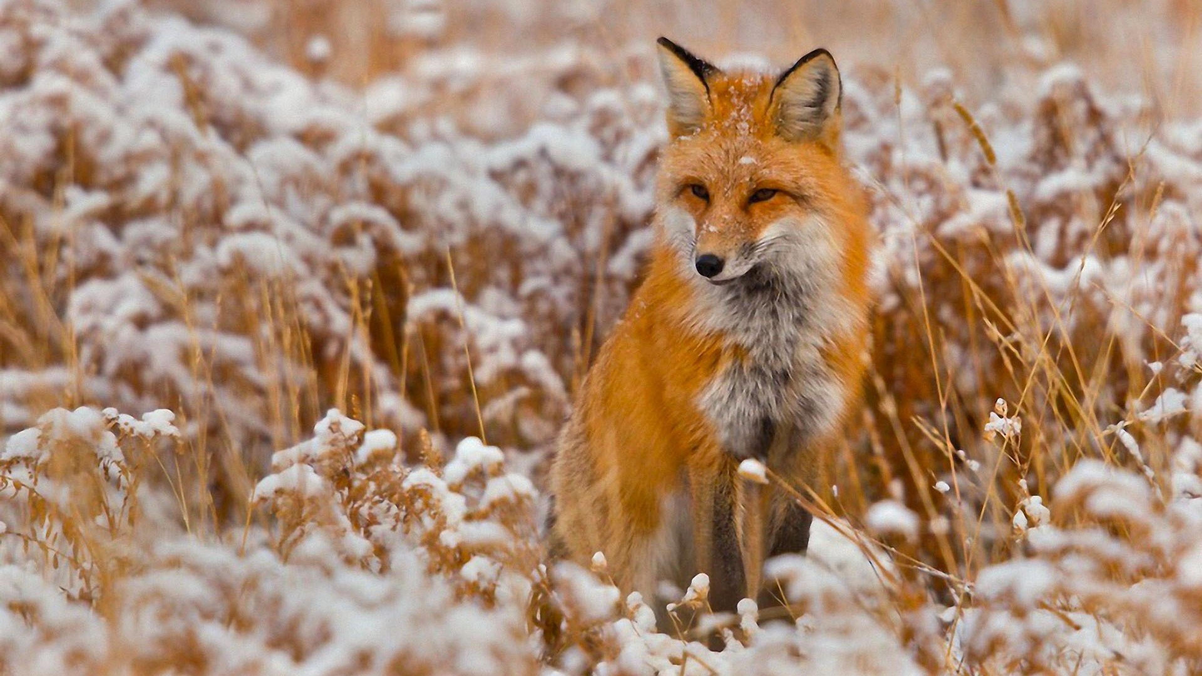 Gazdik, figyelem! Szombaton indul a rókák veszettség elleni vakcinázása