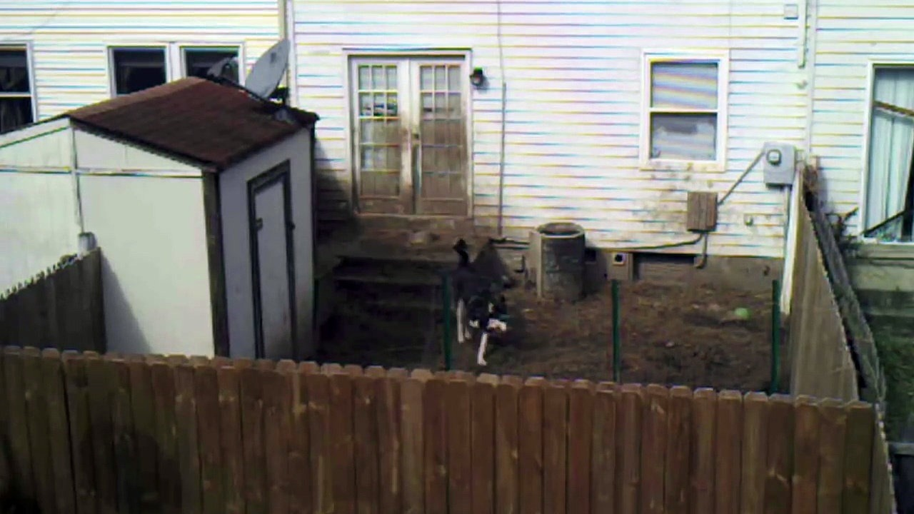Hat héten keresztül figyelték, hogyan bánik a kutyájával… Elszomorító a valóság