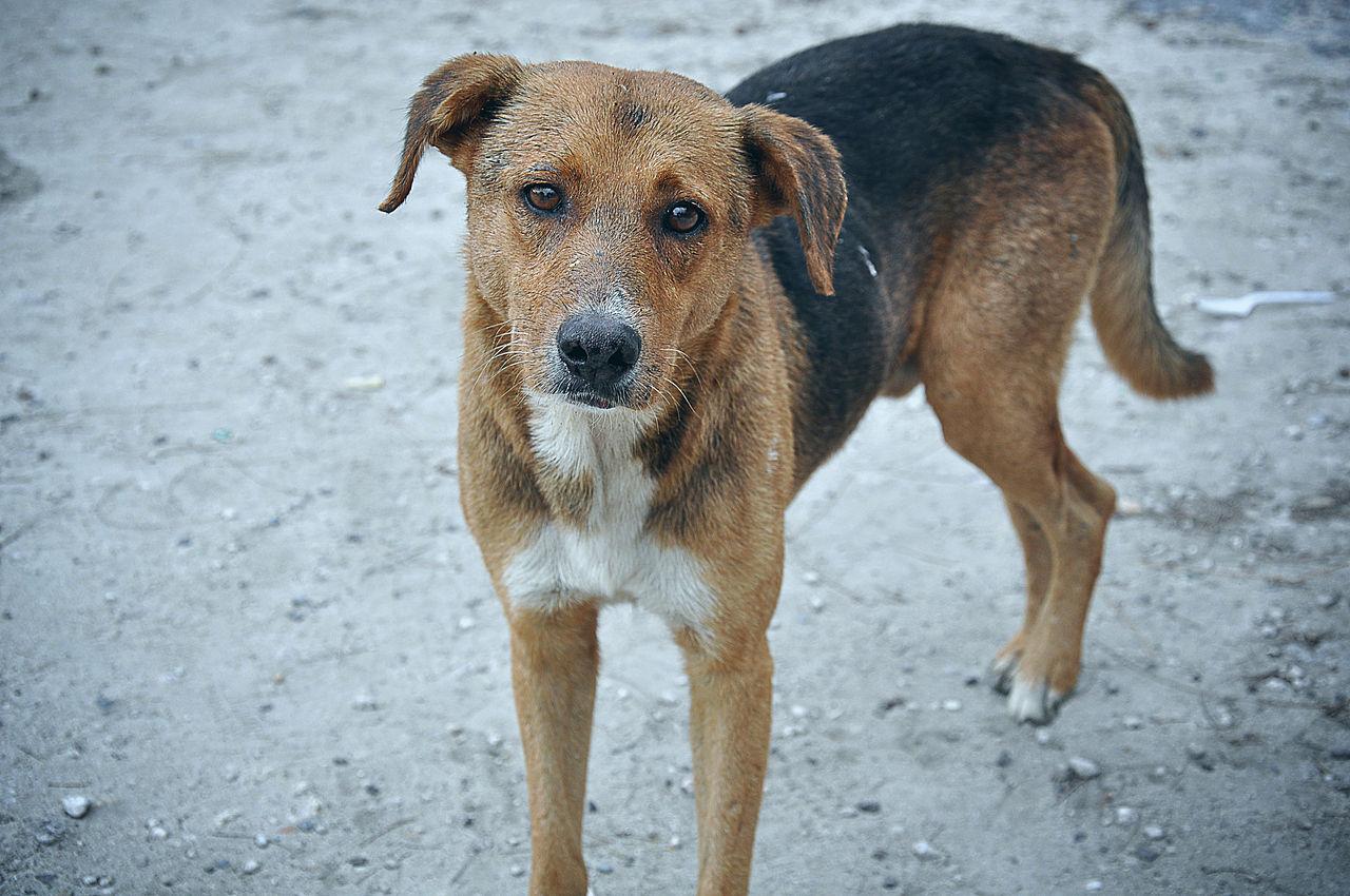 Magyar fejlesztésű alkalmazás segíthet a kóbor kutyák helyzetén
