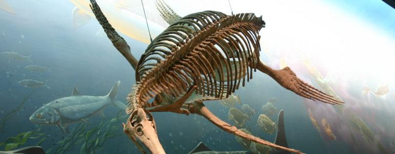 Jura kori vízi ragadozó csontvázát azonosították egy skót szigeten