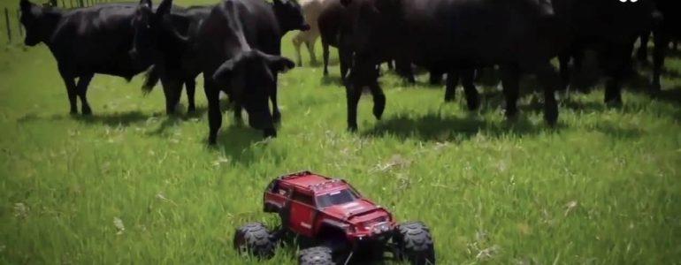 Itt a bizonyíték, hogy a tehenek hihetetlenül kíváncsi teremtmények