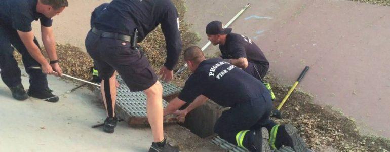 Tűzoltócsapat mentette ki a csatornába esett kiskacsákat