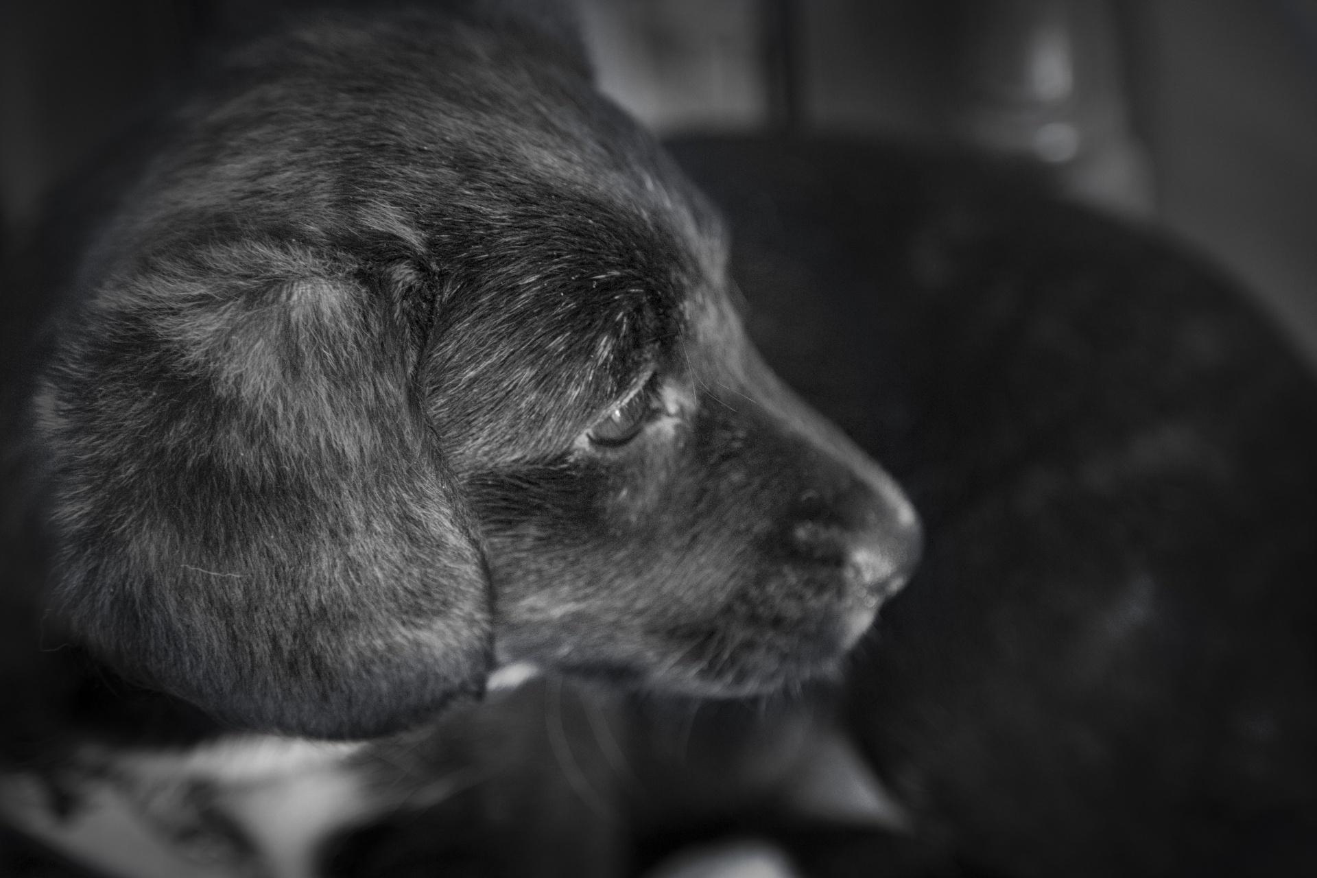 Felakasztotta ismerőse kutyáját egy nagykanizsai férfi