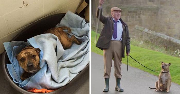 Igazi filmsztár lett a világ legmagányosabb menhelyi kutyusából