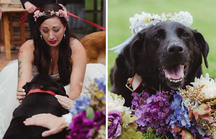 15 évig volt hű barátja, az oltárhoz is elkísérte gazdáját a haldokló kutyus