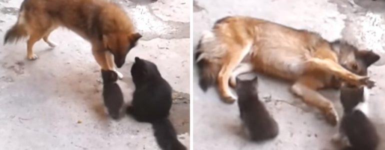 Macskamama bemutatja régi barátjának a kiscicáit… Te pedig elolvadsz a cukiságtól