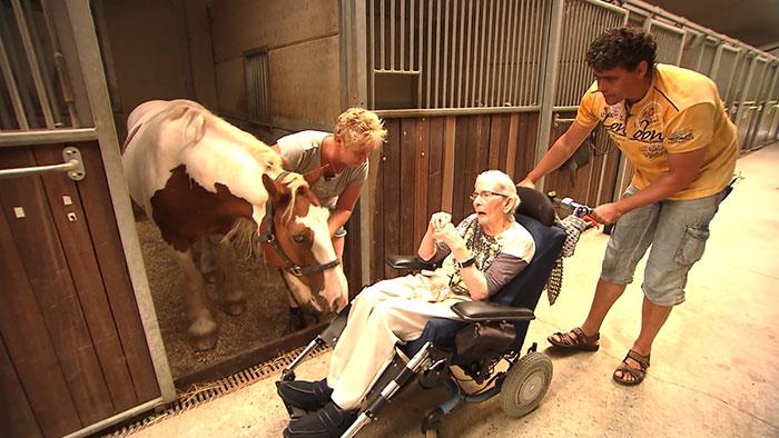 A haldokló néni utolsó kívánsága az volt, hogy még egyszer utoljára lovagolhasson